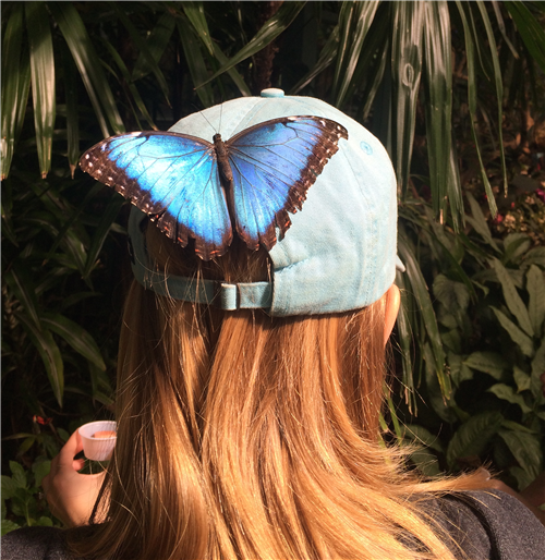 picture of the back of Mrs. Emily when a butterfly landed on her hat